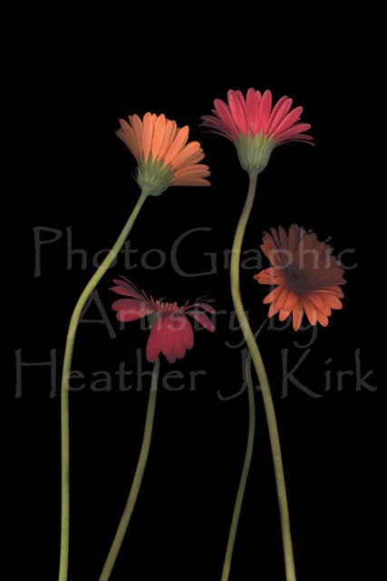 4Daisies on Stems