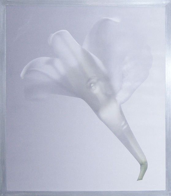 Winged Woman in White Lily