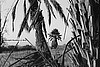 Palm in View - H BW